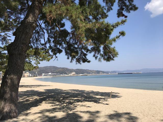 大浜海水浴場と松林