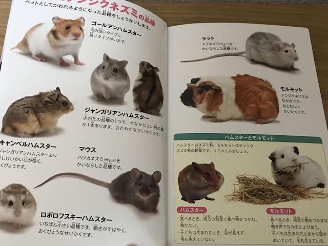 ハッピーセット図鑑「動物/ネズミのなかまたち」の1ページ