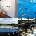 京都水族館(入り口、熱帯魚、イルカショー、ペンギン)