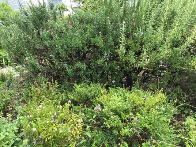 「OCAT屋上ガーデン」ハーブや草花