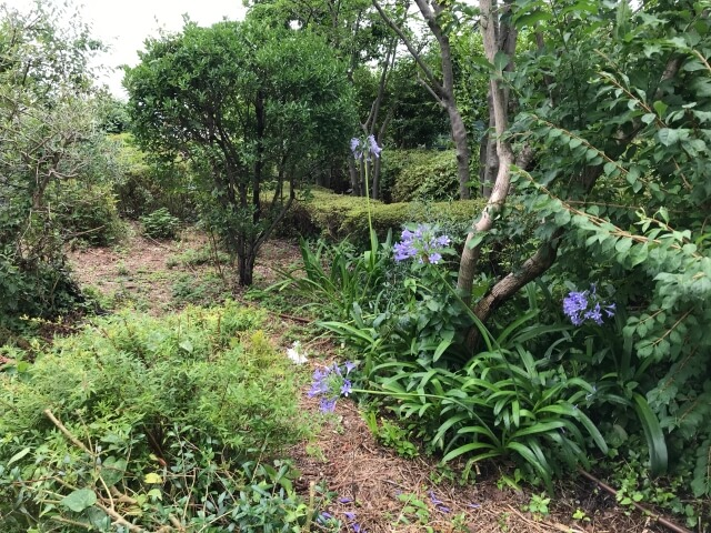 「OCAT屋上ガーデン」草花