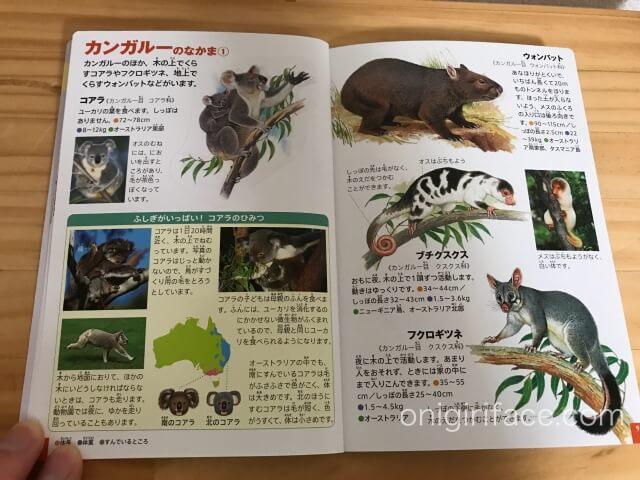 ハッピーセット図鑑「動物/コアラ・カンガルー編」