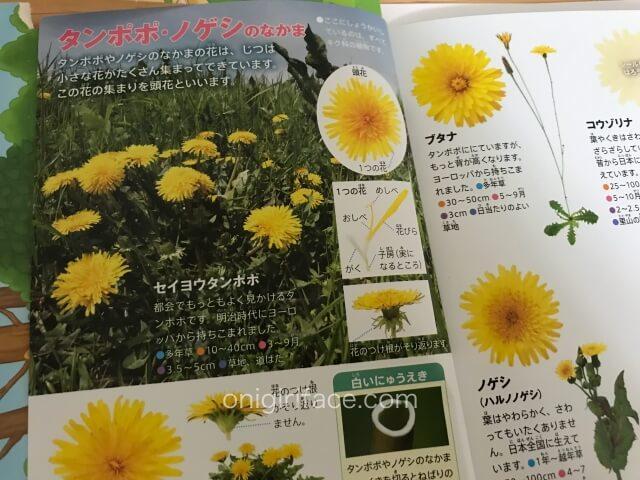 ハッピーセットの図鑑「花/春から初夏の花」たんぽぽのページ